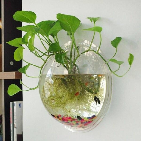 Cultive um jardim aquático com peixes dentro do recipiente de vidro