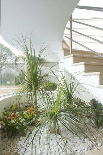 Plantas para jardim de inverno na sala de estar clássica