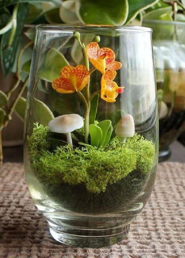 Mini orquídea cultivada dentro do recipiente de vidro
