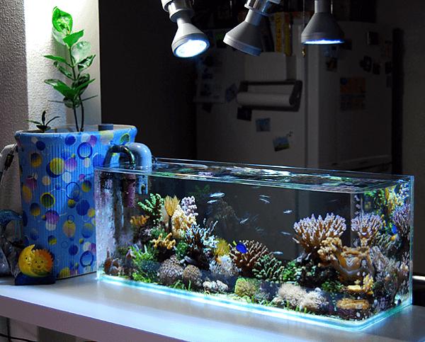 A iluminação artificial pode ajudar na manutenção das plantas para aquário