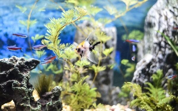 As plantas para aquário natural auxiliam na oxigenação da água