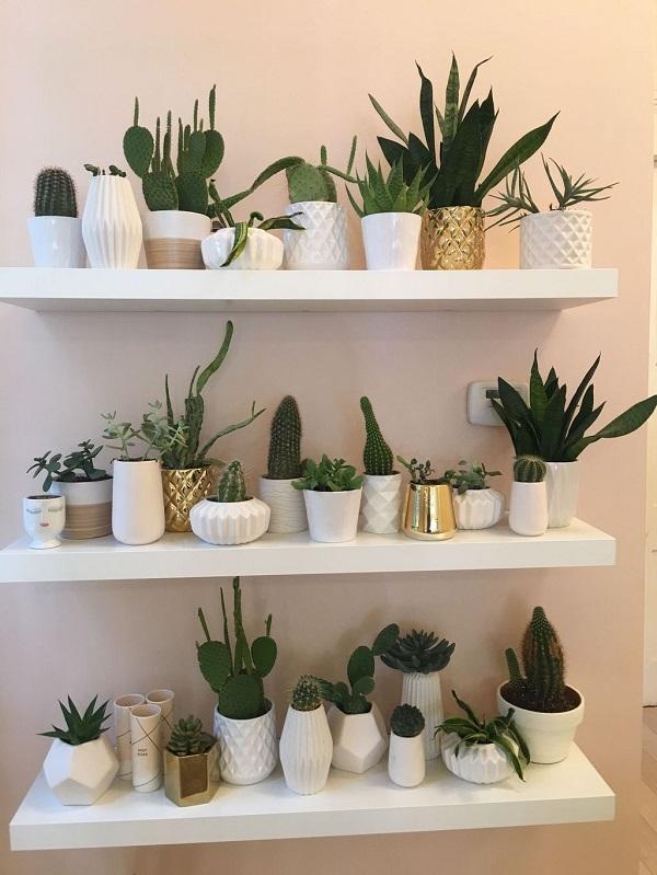 Como plantar suculentas em casa pode transformar a decoração de um ambiente