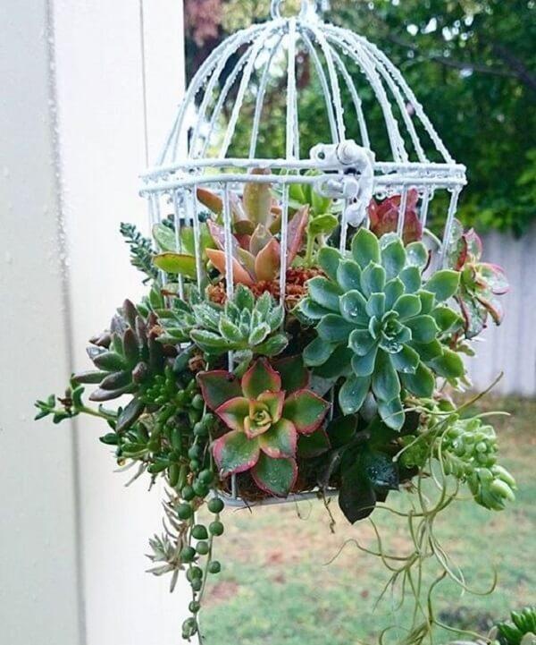 Como plantar suculentas em gaiolas decorativas