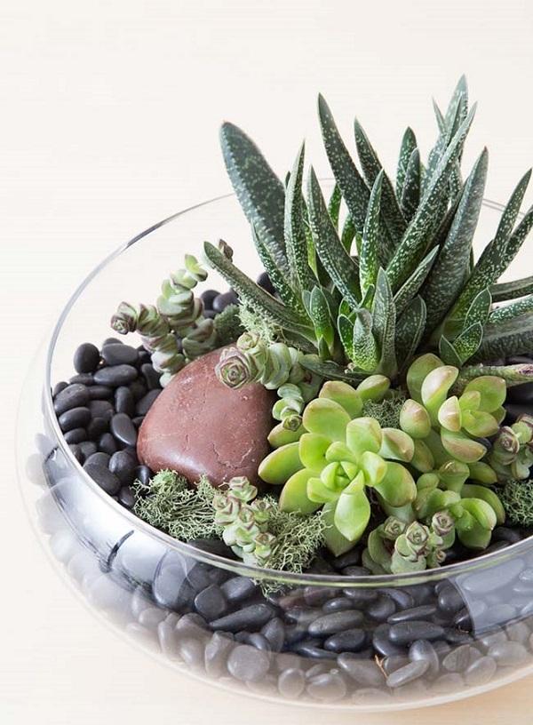 Como plantar suculentas em vidro