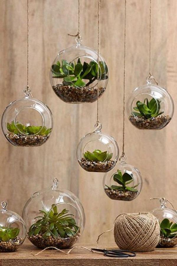 Como plantar suculentas em vidros