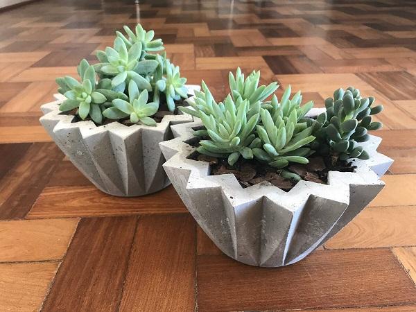 Cultive suas suculentas em vasos de cimento