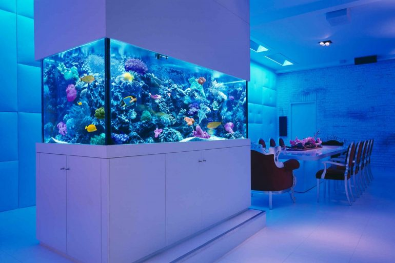 Escolha com cuidado as plantas para aquário que irão fazer parte do seu tanque