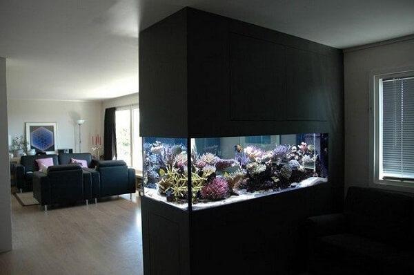 Escolha diferentes plantas para aquário e forma uma lindo cenário