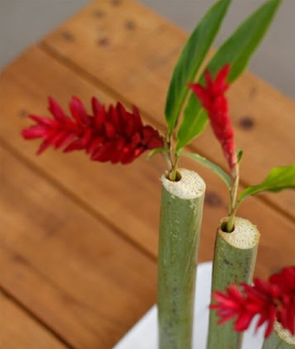 Flores tropicais Alpínias em bambu