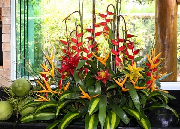 Flores tropicais Helicônias em jardins