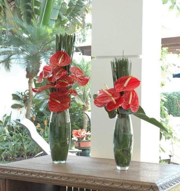 Flores tropicais antúrios em vasos de vidro