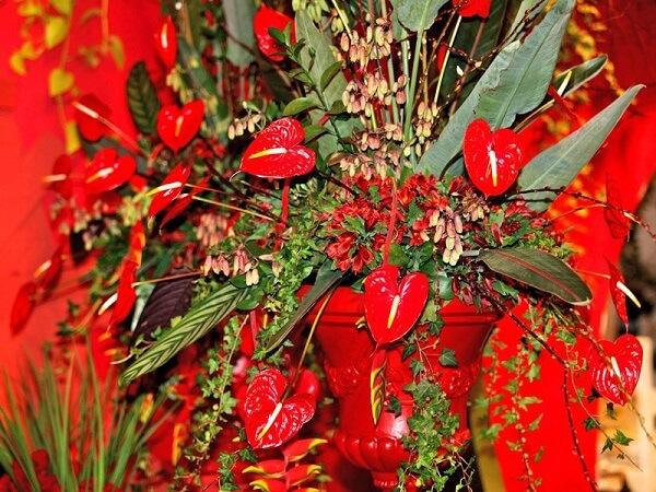 Flores tropicais antúrios vermelho