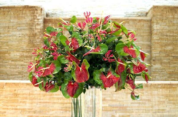 Flores tropicais arranjos de Antúrios