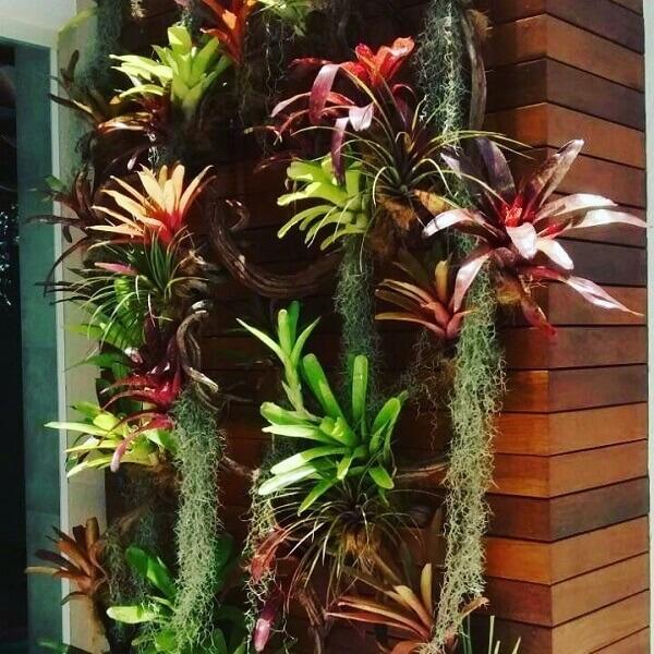 Flores tropicais bromélia jardim vertical