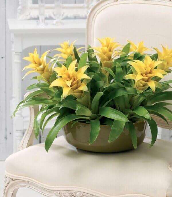 Flores tropicais bromélias amarelas
