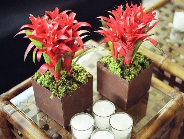 Flores tropicais bromélias vermelhas