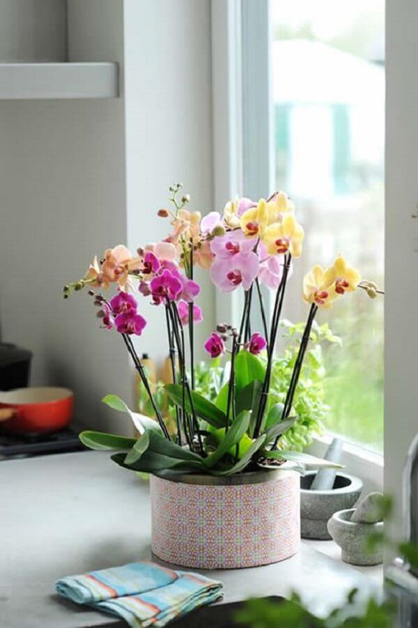 Flores tropicais decoração com orquídeas