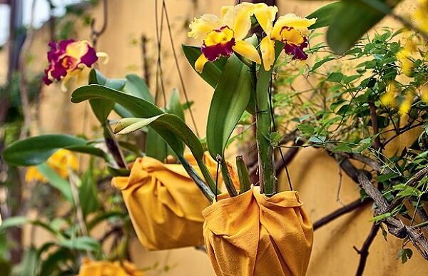 Flores tropicais jardim suspenso de orquídeas