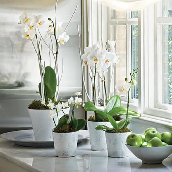 Flores tropicais orquídeas brancas