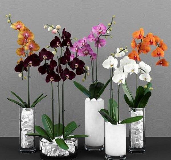 Flores tropicais orquídeas diversas espécies