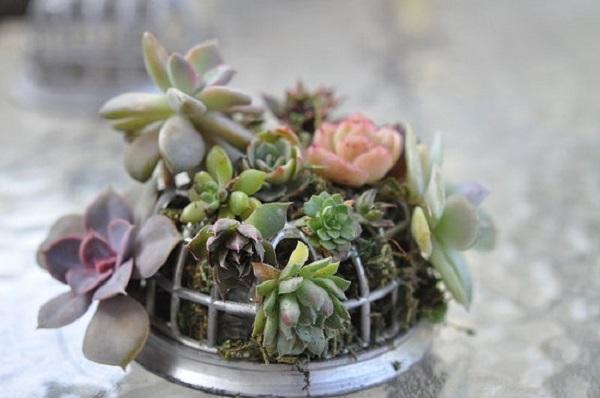Como plantar suculentas formando um lindo arranjo floral