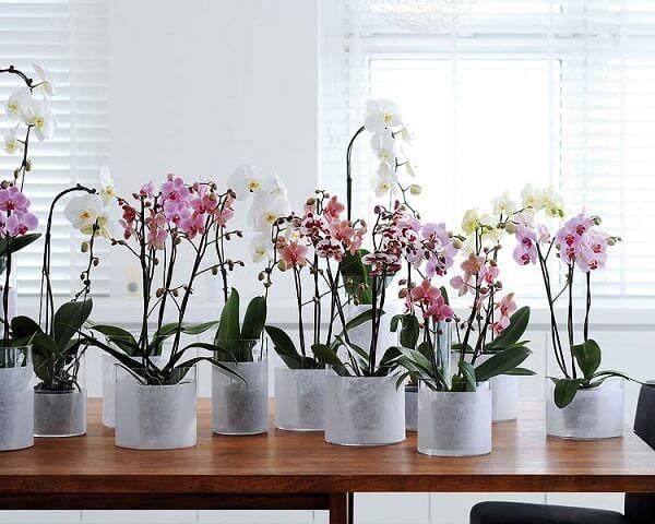 Flores tropicais orquídeas diversas sala