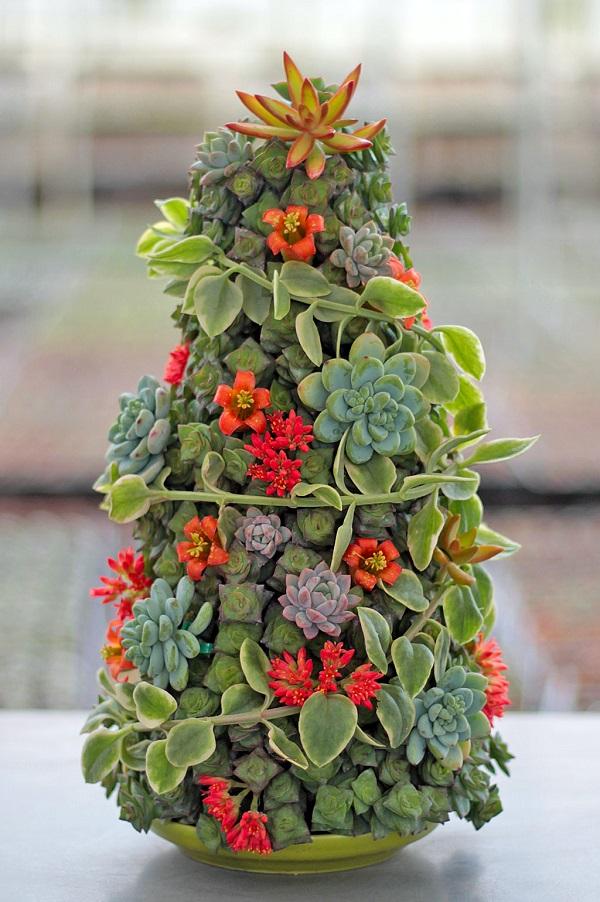 Forme uma linda árvore de natal com suculentas