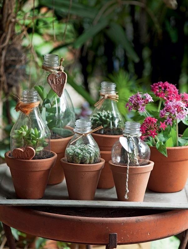 Como plantar sementes de suculentas em mini vasos de barro