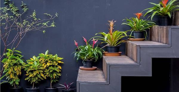 Escada cinza com vasos em diferentes degraus