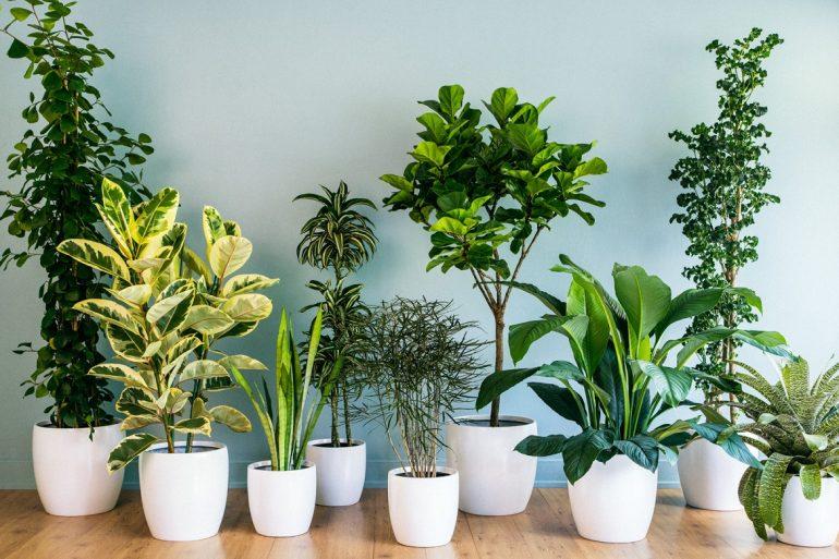 Parede branca, vasos brancos alinhados lado a lado com diferentes plantas