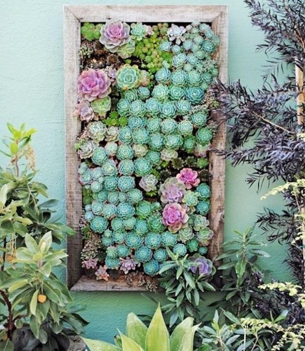 Jardim vertical feito com diferentes espécies de suculentas