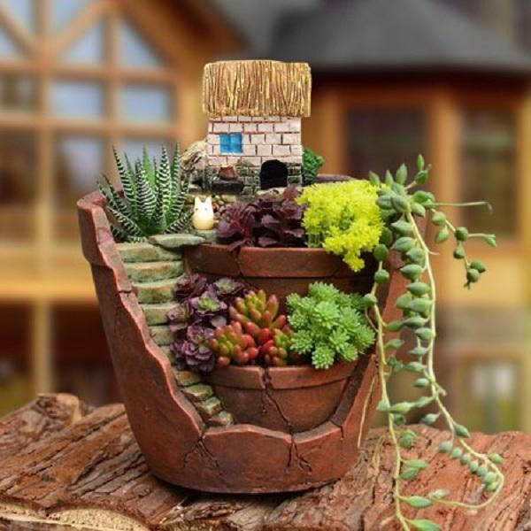 Plantas suculentas como cuidar em um mini jardim
