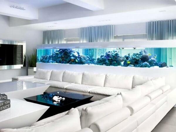 As plantas para aquário se estendem por todo o tanque
