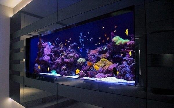 O painel preto destaca as plantas para aquário e toda a vida marinha dentro dele