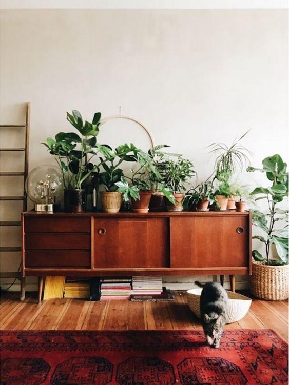 Rack retro de madeira decorada com plantas