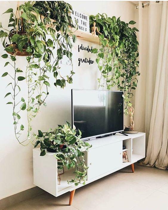 Sala moderna com rack retro e prateleiras de plantas
