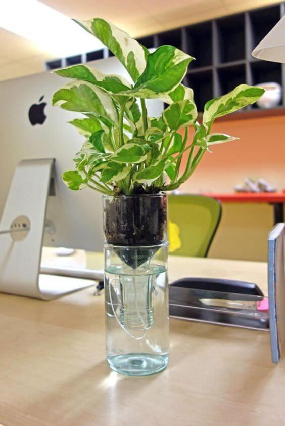 Aprenda a fazer vaso autoirrigável para decorar sua casa