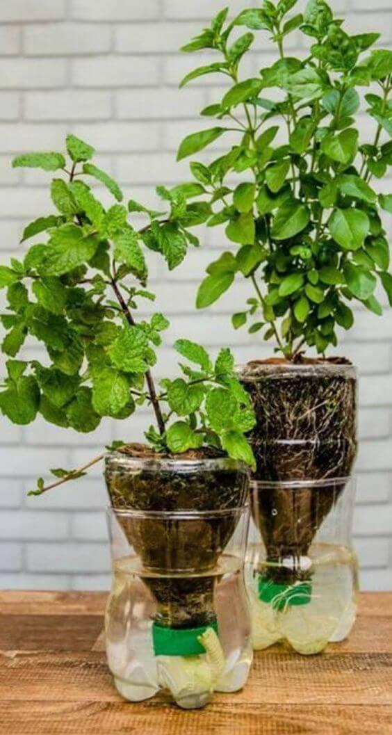 Aprenda como fazer vaso autoirrigável