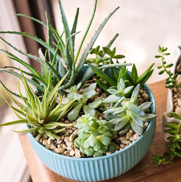 Como plantar suculentas em vasos de cerâmica