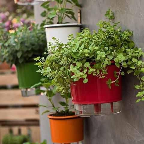 Jardim com vaso autoirrigável