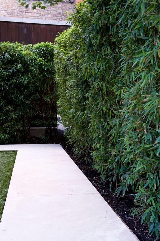 Jardim com a planta podocarpo