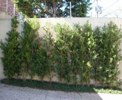 Jardim com plantas próximo ao muro