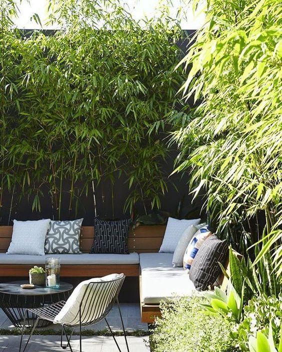 Planta podocarpo jardim moderno