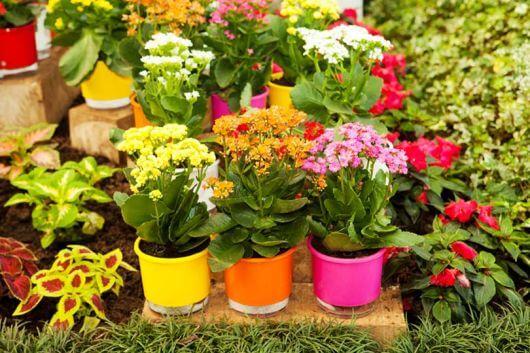 Decore seu jardim com o vaso autoirrigável colorido