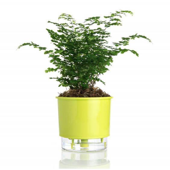 Faça uma horta com o vaso autoirrigável. É bem prático