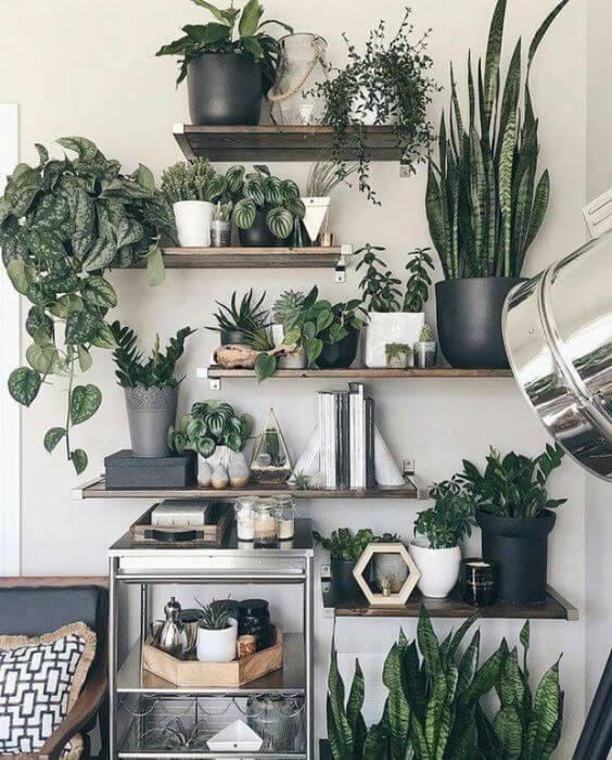 Casa decorada com vasos de plantas