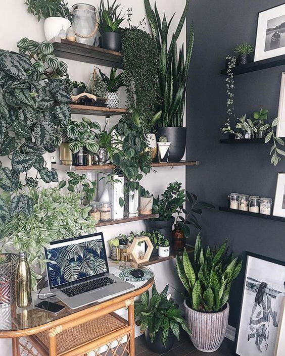 Vaso de plantas autoirrigável na decoração de casa