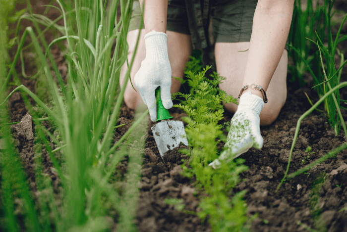 Aproveite a nova rotina para cultivar alimentos que fazem parte do seu dia a dia