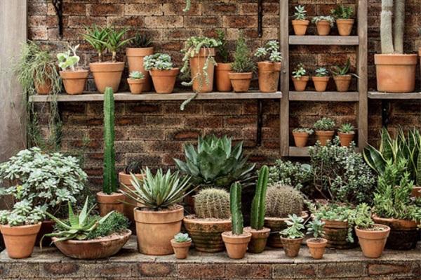 Vasos para suculentas jardim externo