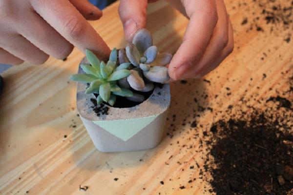 Vasos para suculentas de cimento